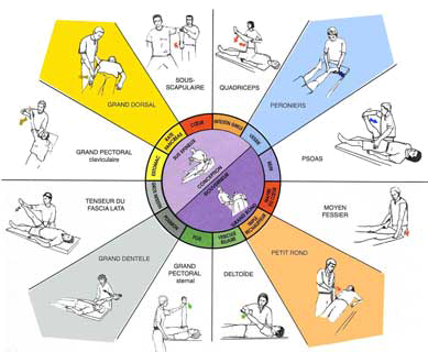 Kinésiologie Santé par le toucher