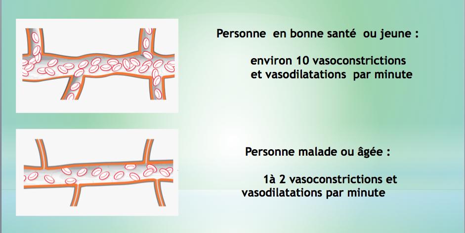 Bemer et son action sur la vasomotricité